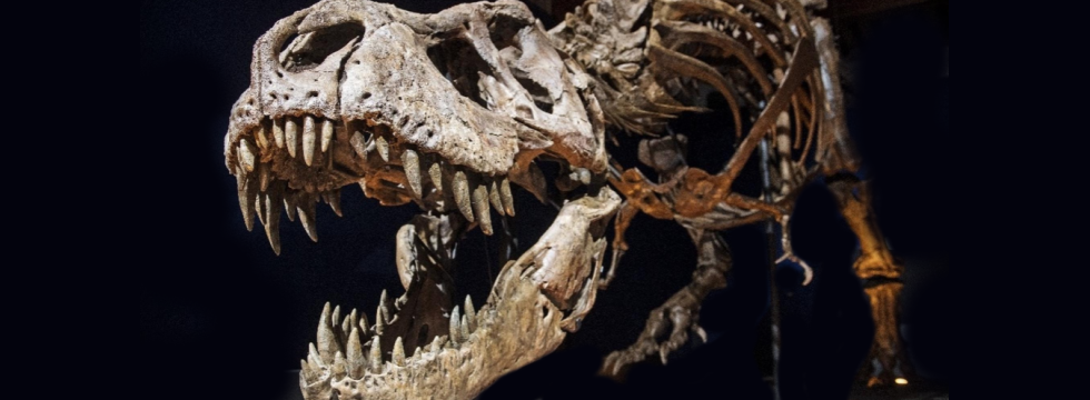 TRex skeleton with mouth open banner
